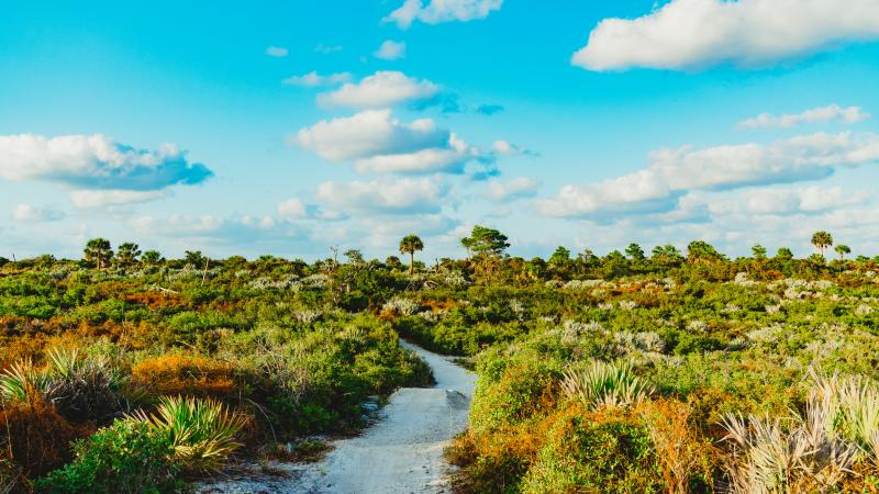 an image of a dirt trail with shrubs on each side and a bright blue sky with clouds.