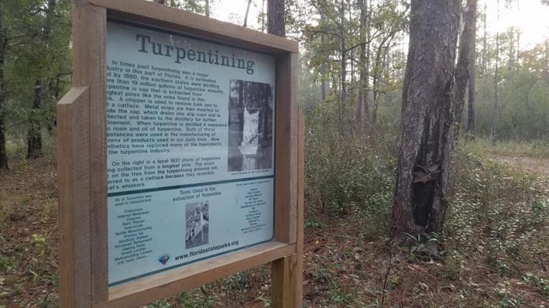 Pines, Flatwoods, Turpentine