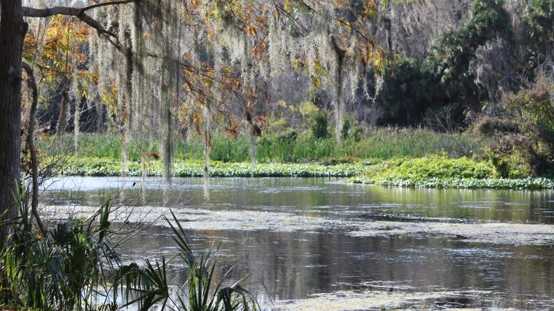 Lower Wekiva River Preserve State Park
