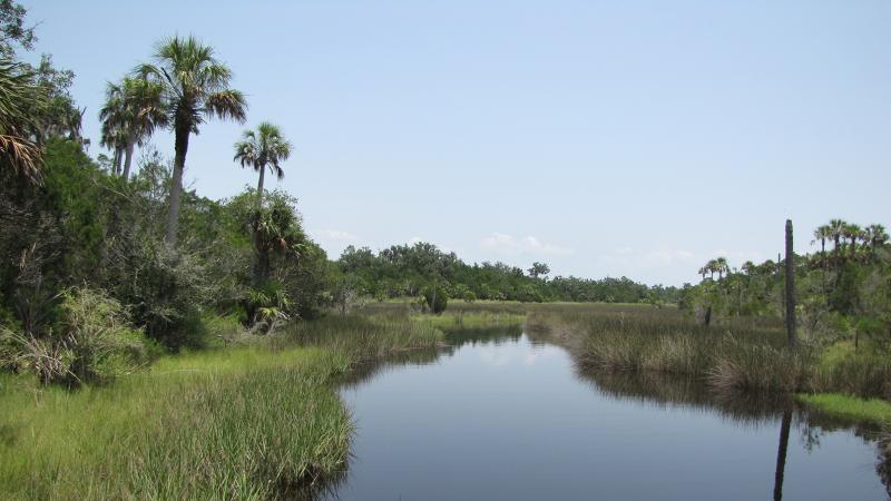 View of water and palm trees winding in the salt marsh