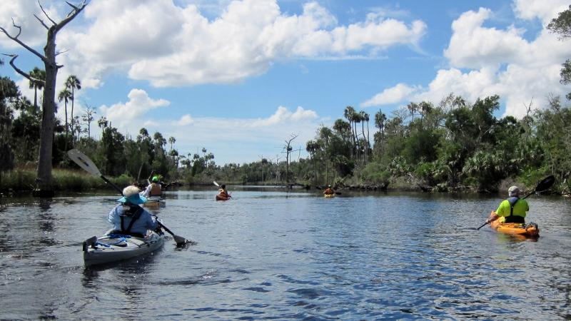 Group of kayaks paddle Waccasassa Bay with pines and snags along the shore