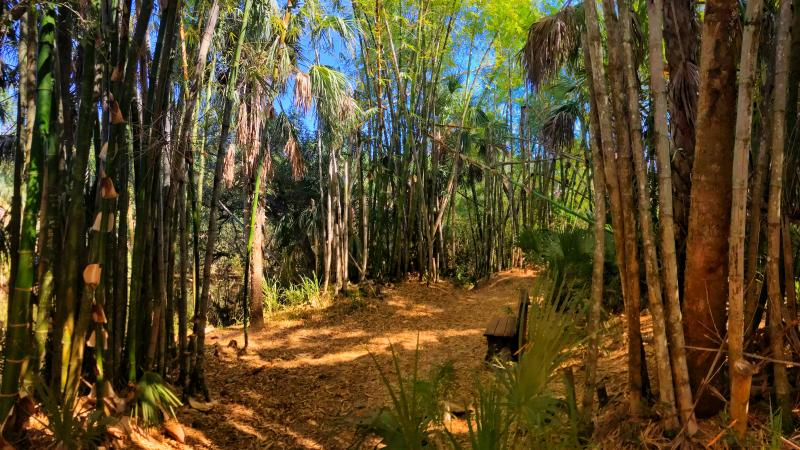 A view of the bamboo trails.