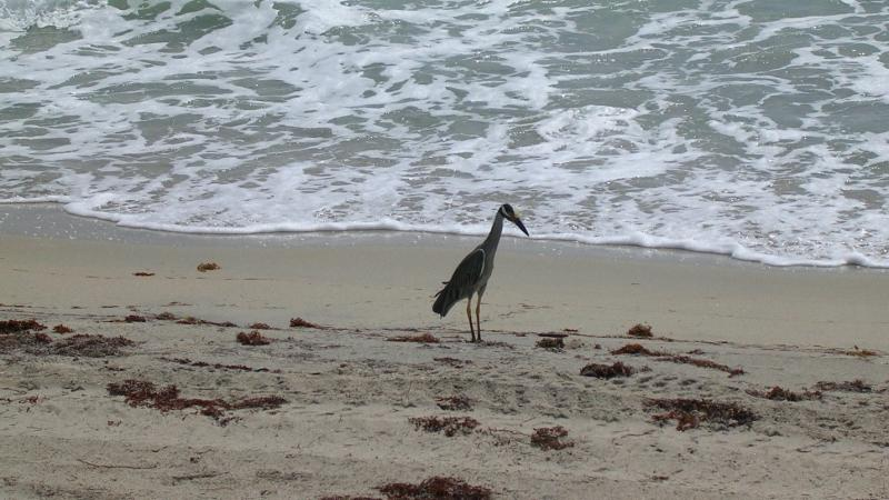 A view of a bird walking along the shore.