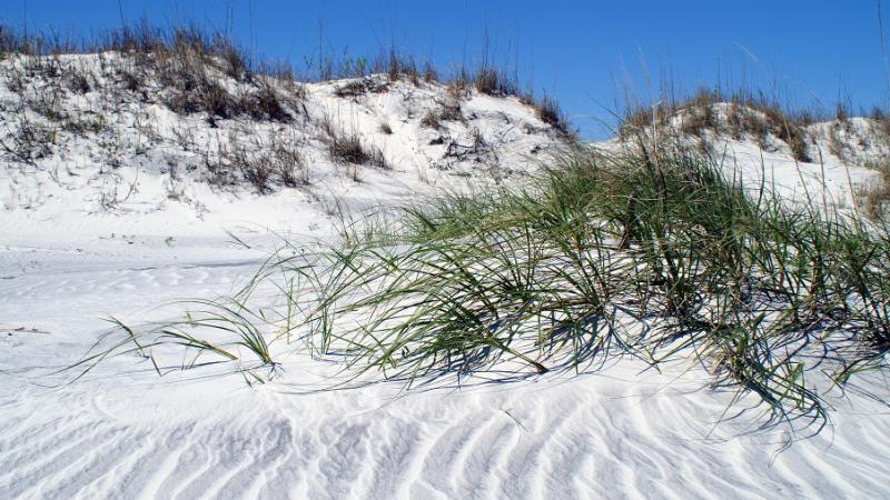 Image of Sand Dunes with grass