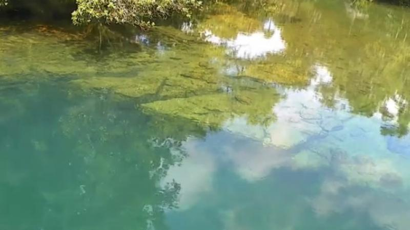Watch this video to see if any manatees swim by.