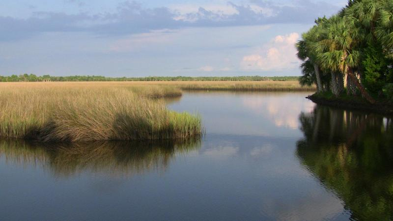 Image of a stand of palm trees by the still and calm water of the salt marsh.