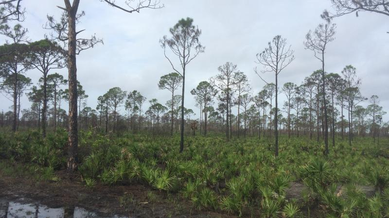 The landscape shows re-growth following a prescribed fire.