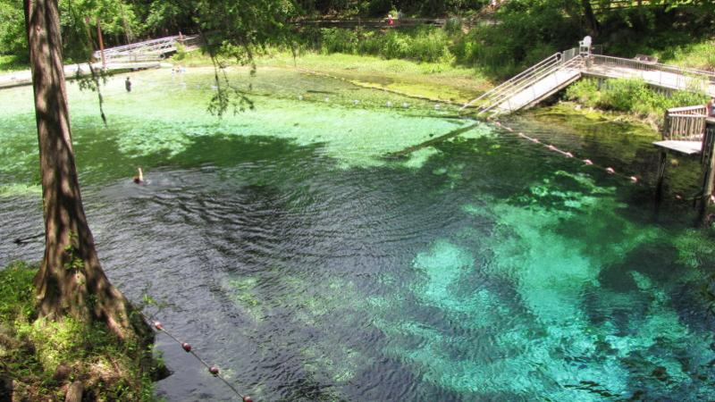 blue and green water mix in a spring with cypress trees and a swimming platform