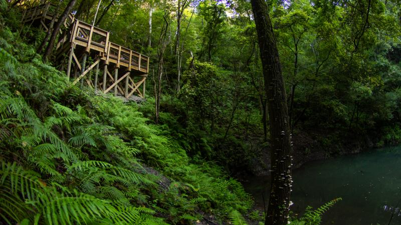 A wooden boardwalk ends above a verdant green sinkhole filled with water and surrounded by vegetation