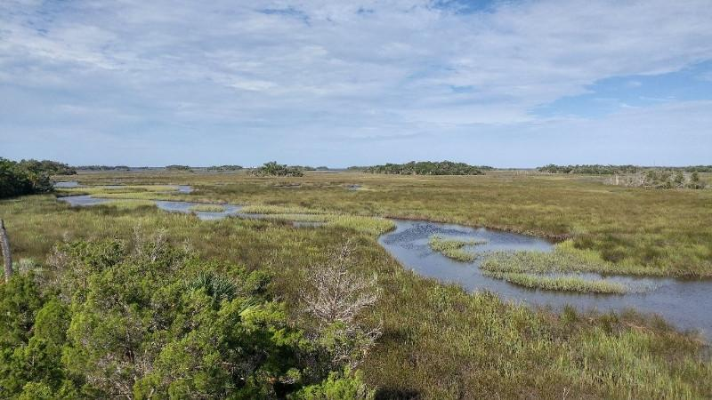 Image of a tidal creek on the seven mile loop trail at crystal river preserve state park.