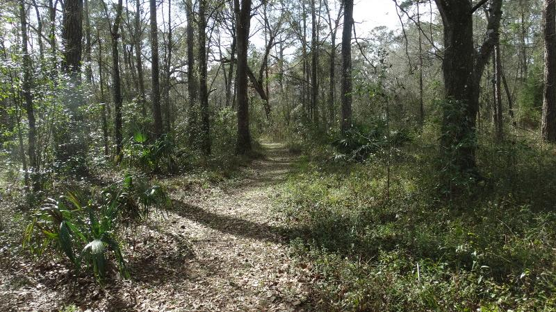 a trail extends straight through trees and saw palmettos.