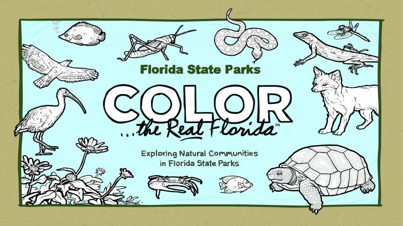 The coloring book cover