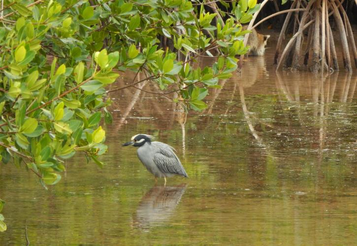 Heron wading in the water