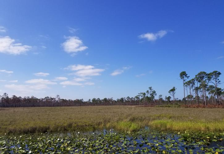 Wetlands at SSRPSP