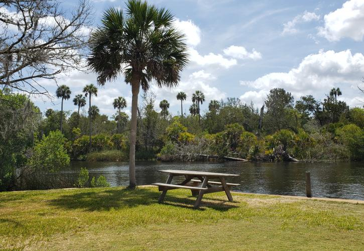Picnic table next to palm tree on the river bank.