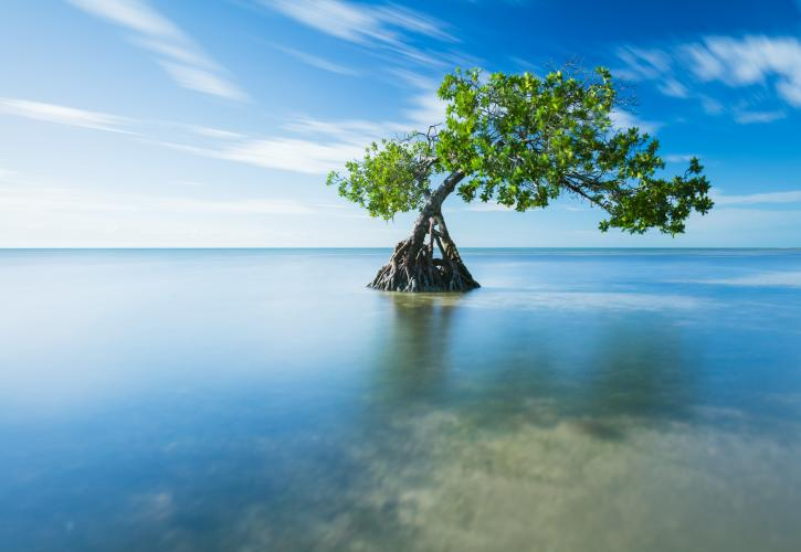 A view of a tree growing out of the surrounding water.