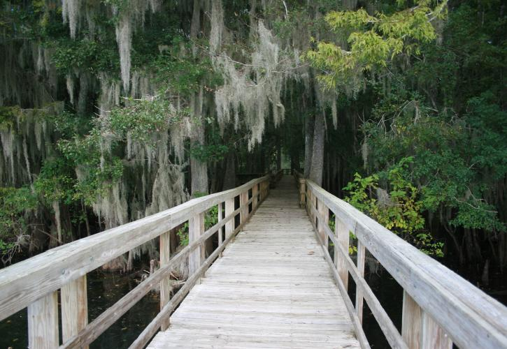 Boardwalk at Manatee Springs State Park