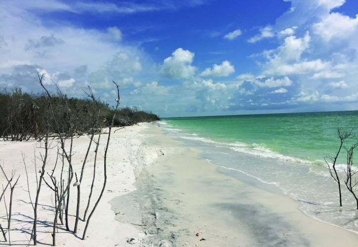 Resultado de imagen para Playa Caladesi Island State Park