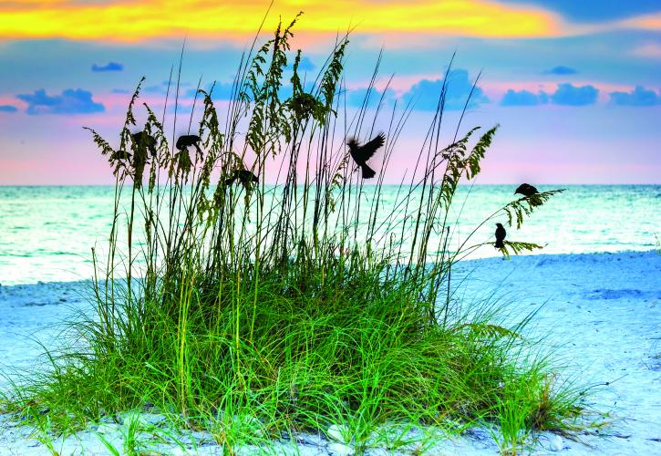 Birds resting on Sea Oats on Beach