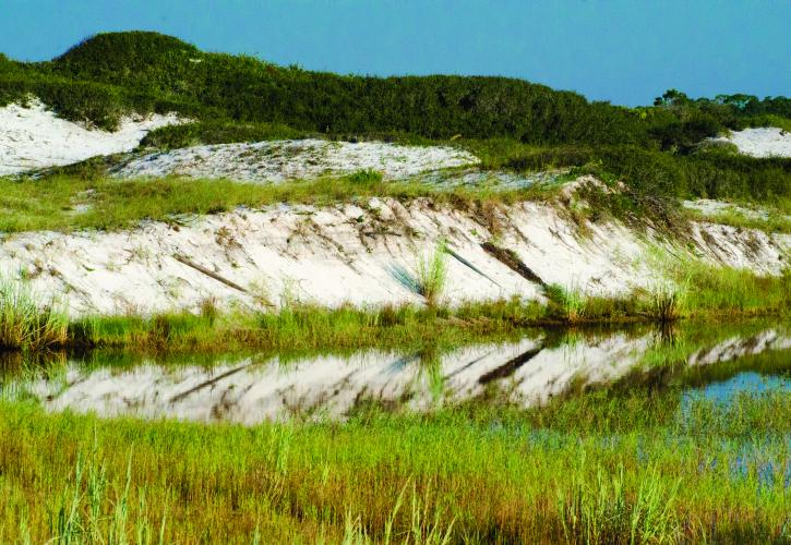 Sand Dunes with Sea Oats