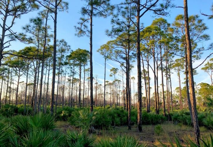 Flatwoods at SSRSP