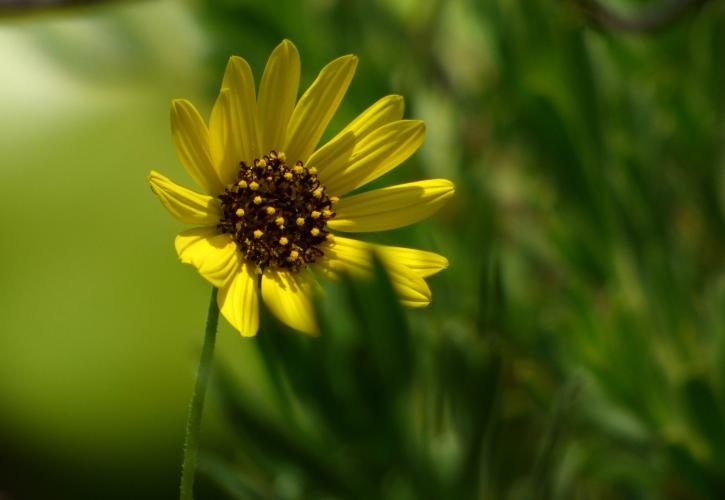 A close-up view of a yellow flower.
