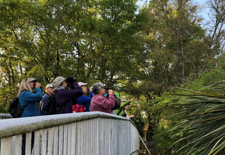 Visitors looking for birds on bridge