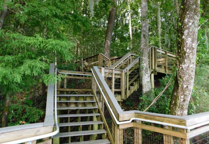 Boardwalk Staircase at Lake Talquin State Park