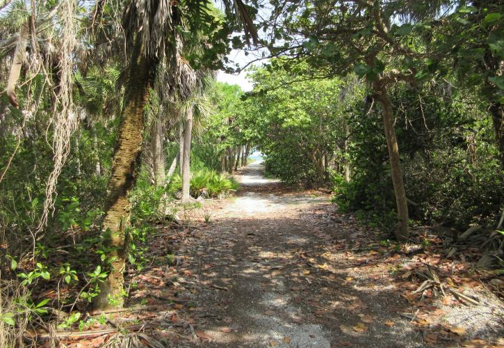Shaded trail at Cayo Costa