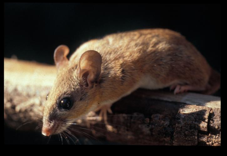 A view of a small rodent.