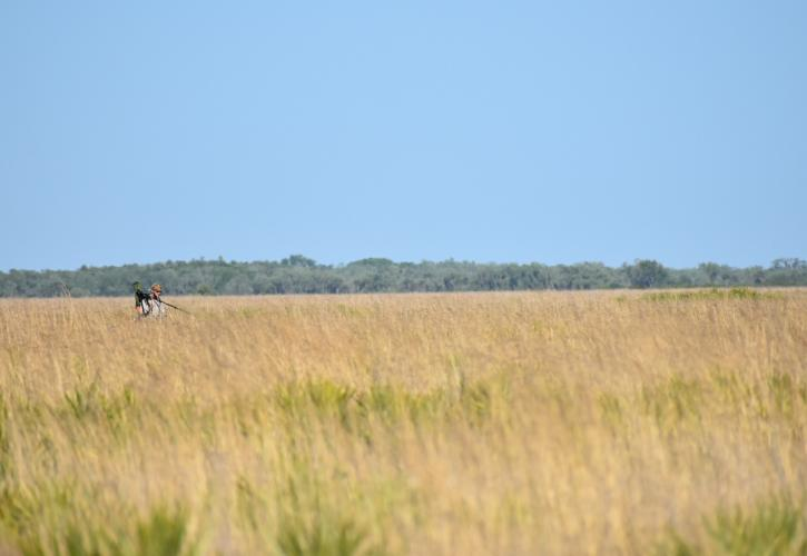 FGSP technician surveying the prairie for the Florida Grasshopper Sparrow