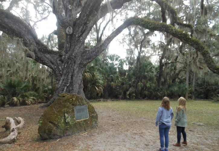 Two women looking up at the Fairchild oak tree