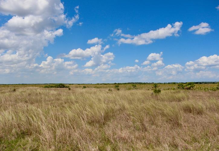 View of Kissimmee Prairie