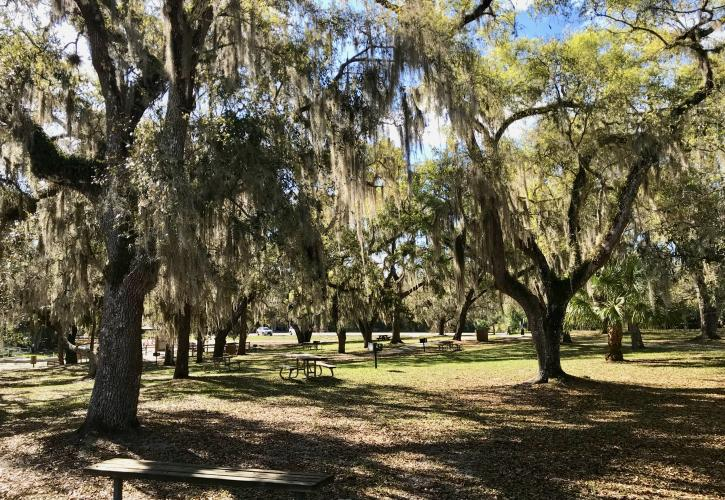 Live Oaks by Picnic Area