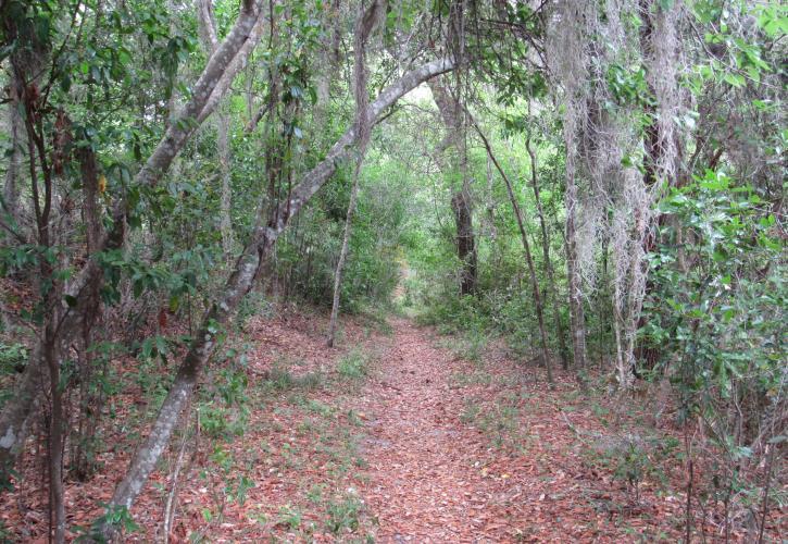 Ravine Gardens State Park   Florida State Parks