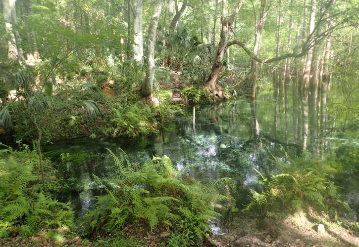 Little Fanning Springs