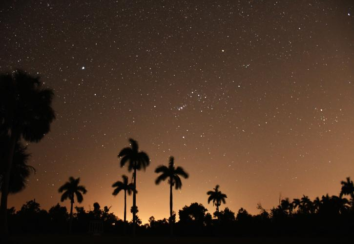 Star filled sky with silhouettes of Royal palms in the foreground.