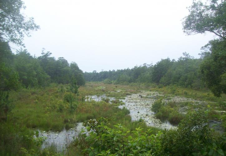 View of wetland area called Puddin' Head Branch.