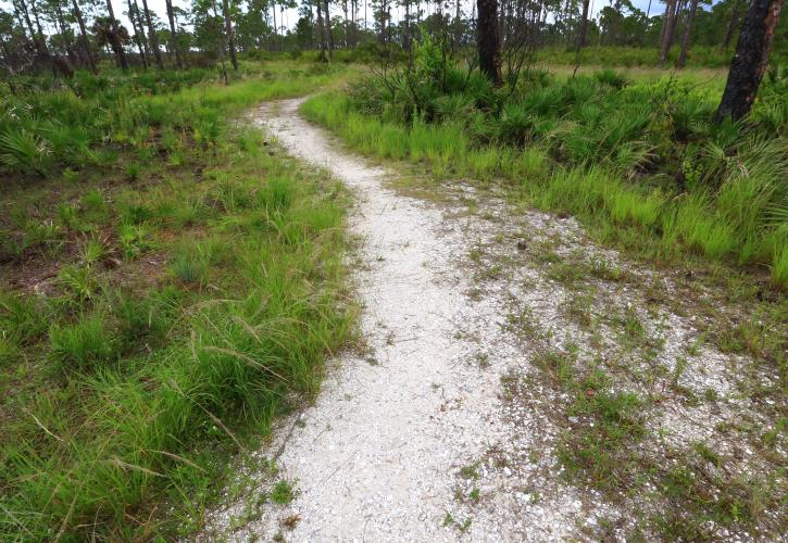 Charlotte Harbor Preserve Nature Trail