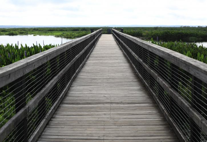 Boardwalk view of marsh