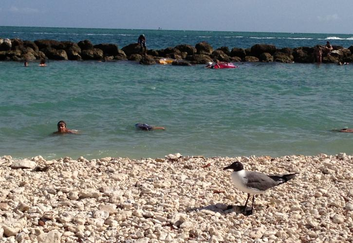 Swimmers with seagull watching from shore