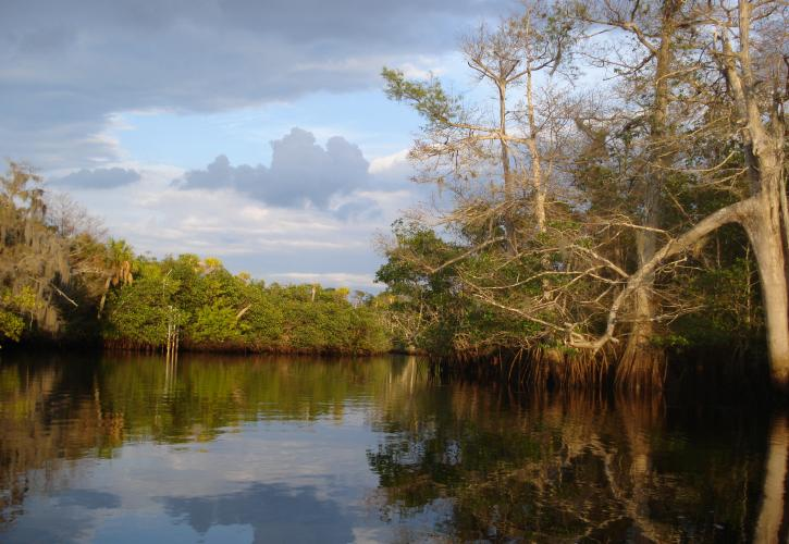 Loxahatchee River View