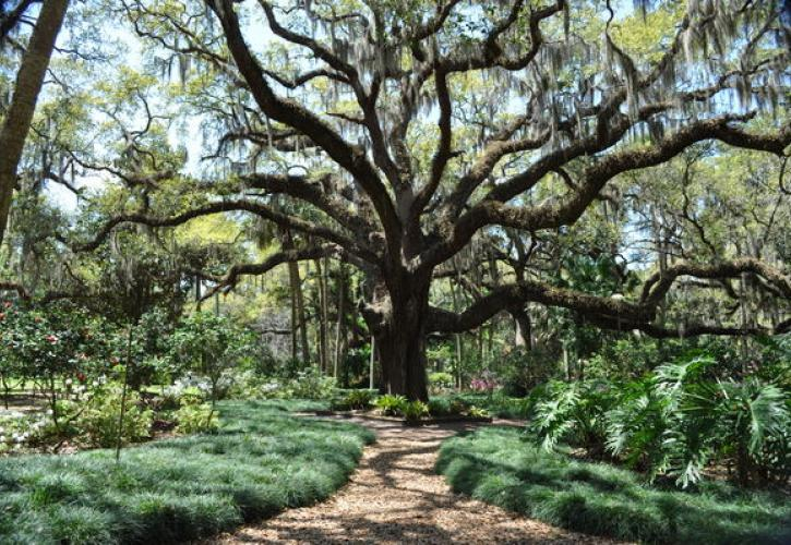 Washington Oaks Gardens State Park Florida State Parks