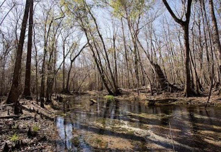 Tributary on St. Marks River