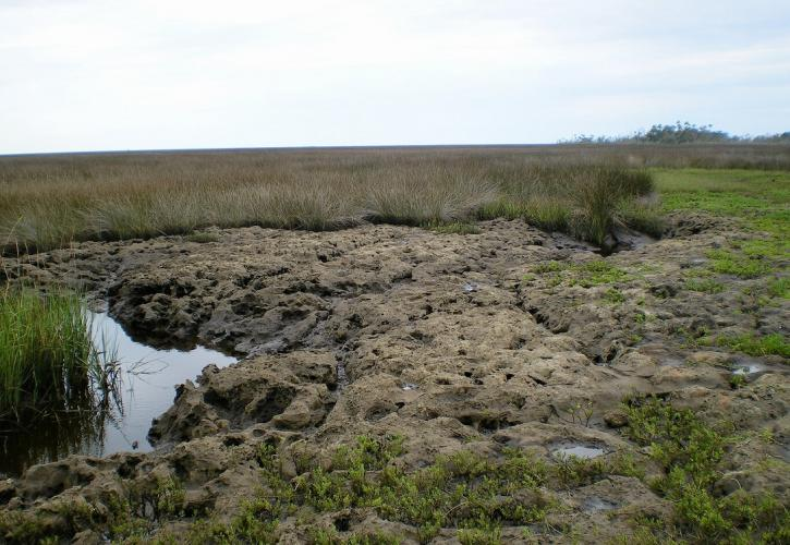 Exposed limestone with creek seeping out to the salt marsh
