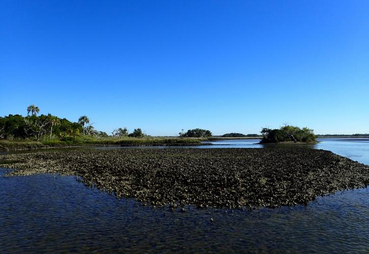 Large oyster bed in Waccasassa Bay on a blue sky day