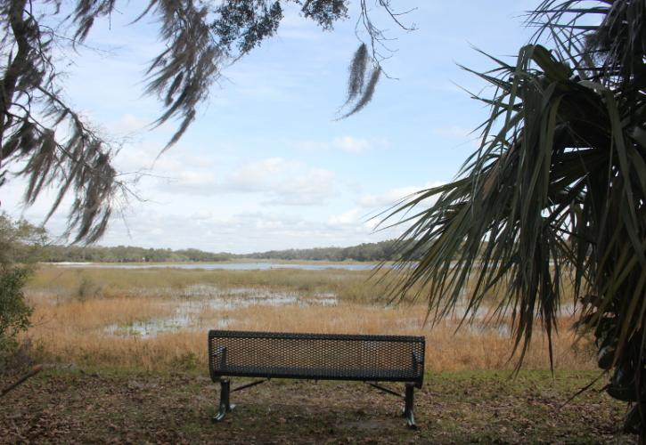 a bench looks out at a broad lake next to a palm tree.