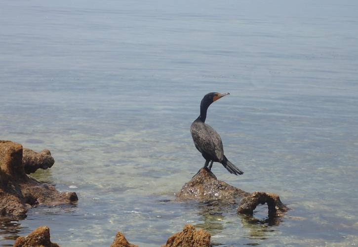 a cormorant sits on a rock on the bank of Indian Key