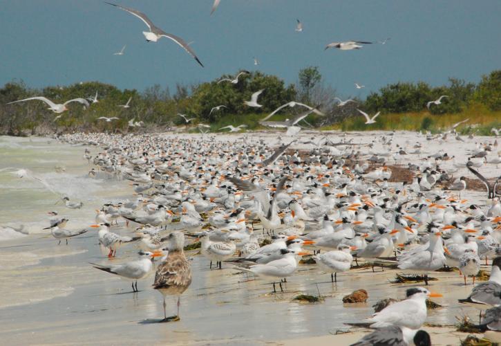Egmont Key State Park Florida State Parks