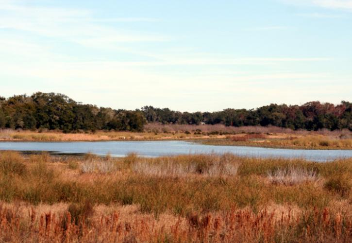 a large lake lies behind a sea of amber grasses, with trees on the far shore